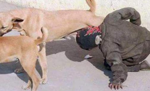 وزارة الداخلية تكشف حقيقة صورة متشرد يرضع من ثدي كلبة