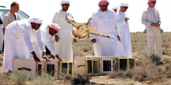 صورة أمراء قطريون في ضيافة جبهة البوليساريو الانفصالية