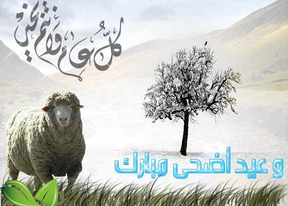 صورة عاجل … وزارة الأوقاف تعلن رسميا يوم عيد الأضحى (بلاغ )
